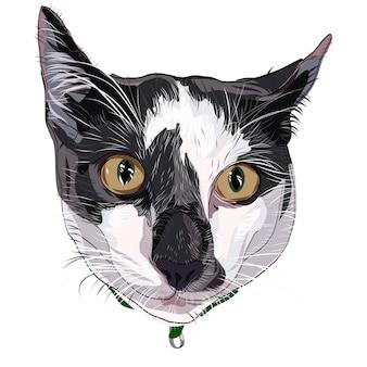 Visage de chat dessiné à la main