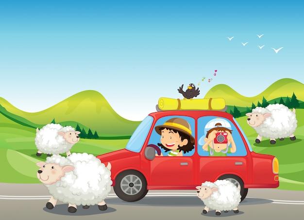 La voiture rouge et les moutons sur la route