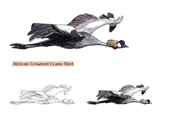 Vol d'oiseau de grue couronnée africaine