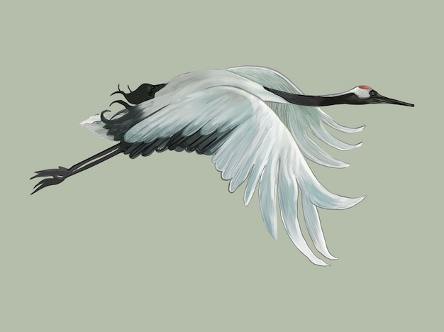 Voler élégant grue japonaise blanche