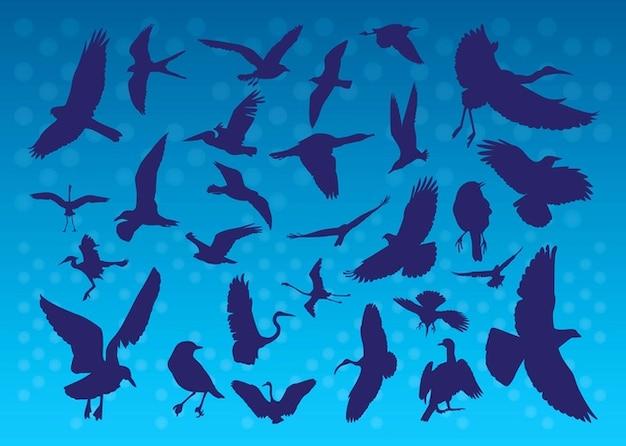 Voler des silhouettes d'oiseaux