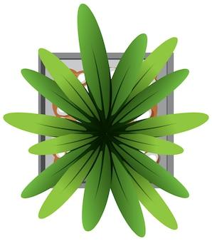 Vue aérienne de la plante en pot isolé sur fond blanc