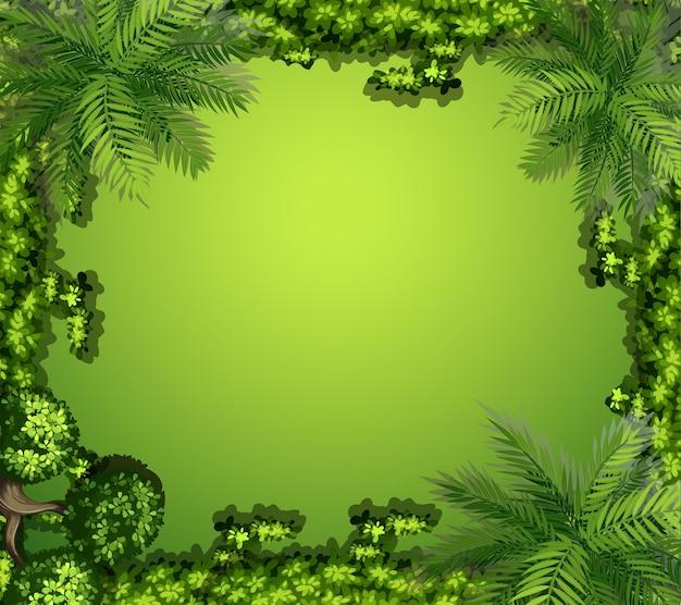 Vue aérienne des plantes et des rochers