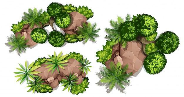 Vue aérienne des plantes et des roches