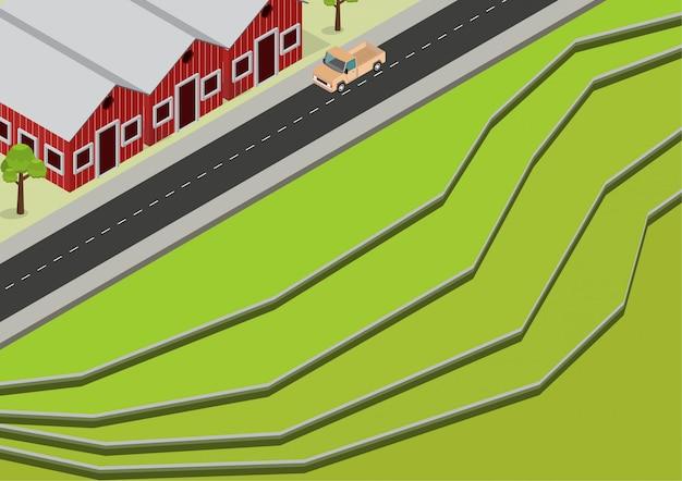 Vue aérienne de rizières en terrasses vert isométrique