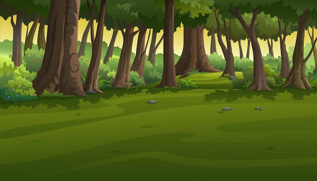 Vue dans la forêt au coucher du soleil.