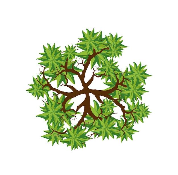 Vue De Dessus D'arbre. Facile à Utiliser Dans Vos Projets D'aménagement Paysager Plante De La Couronne De Naturel. Espaces Verts Naturels. Vecteur Premium