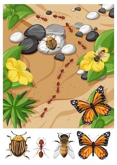 Vue de dessus de différents types d'insectes dans la scène de jardin