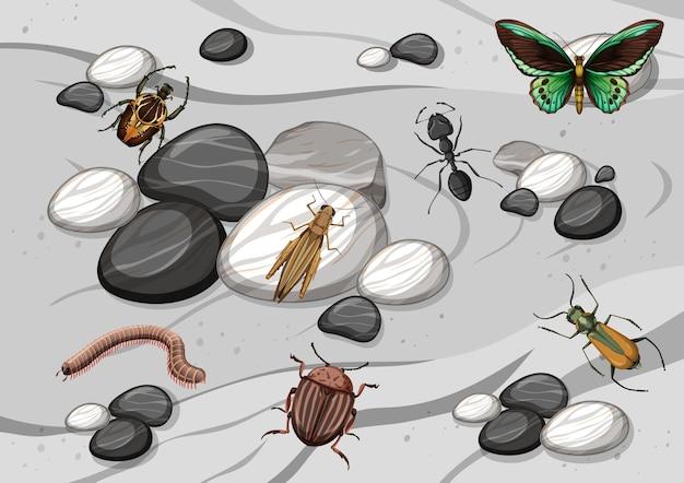 Vue de dessus de différents types d'insectes