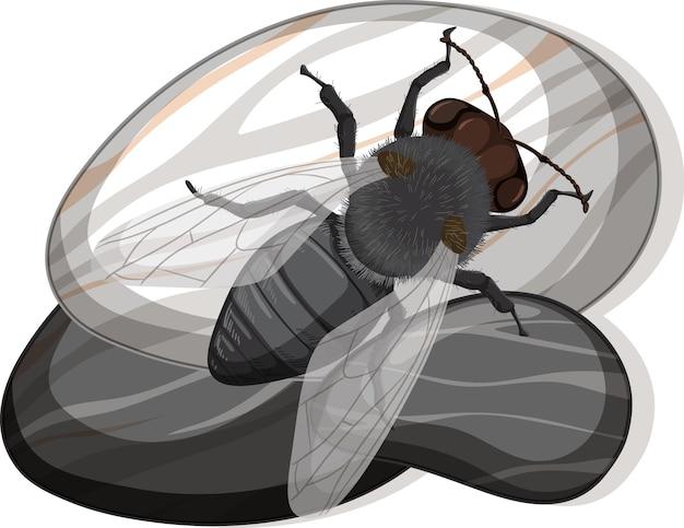 Vue de dessus de la mouche domestique sur une pierre sur fond blanc