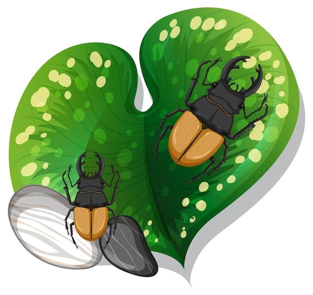 Vue de dessus de nombreux coléoptères sur une feuille isolée