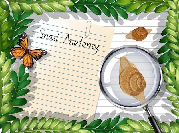 Vue de dessus de papier blanc avec des feuilles et des éléments de papillons et d'escargots