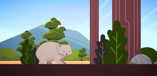 Wombat, marche, dans, forêt, australien, animal sauvage, faune, faune, concept, paysage, horizontal