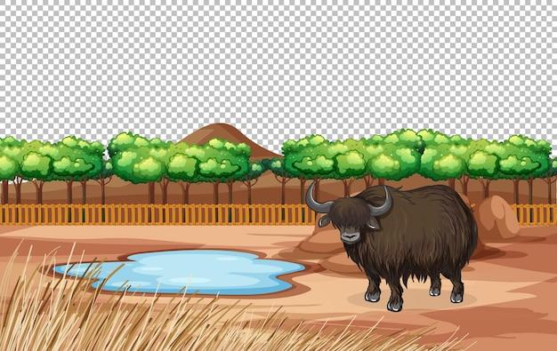 Yak dans la nature paysage scène transparente