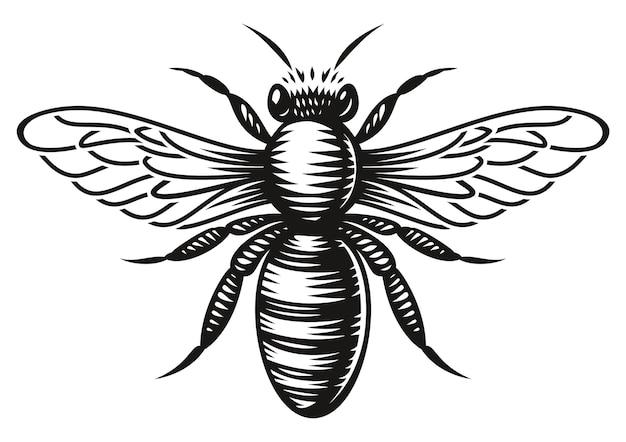 Una abeja de miel en blanco y negro en estilo de grabado sobre fondo blanco.