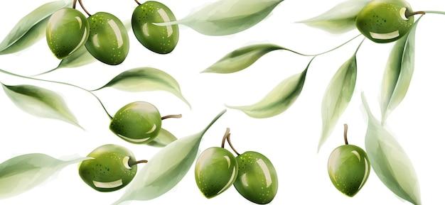 Aceitunas verdes con hojas y luz que se refleja en la estructura