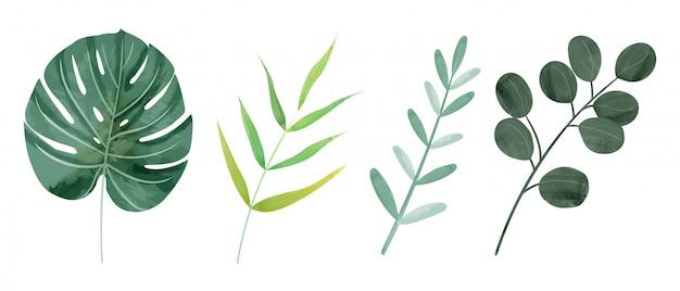 Acuarela botánica hojas silvestres
