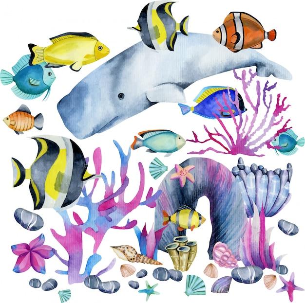Acuarela de cachalote e ilustración de peces exóticos.