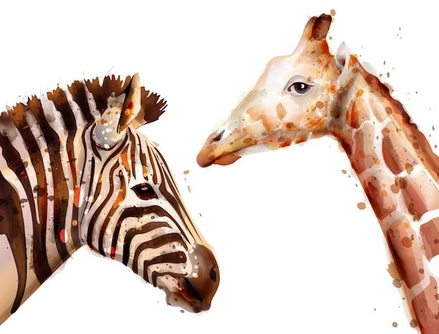 Acuarela de cebra y jirafa.