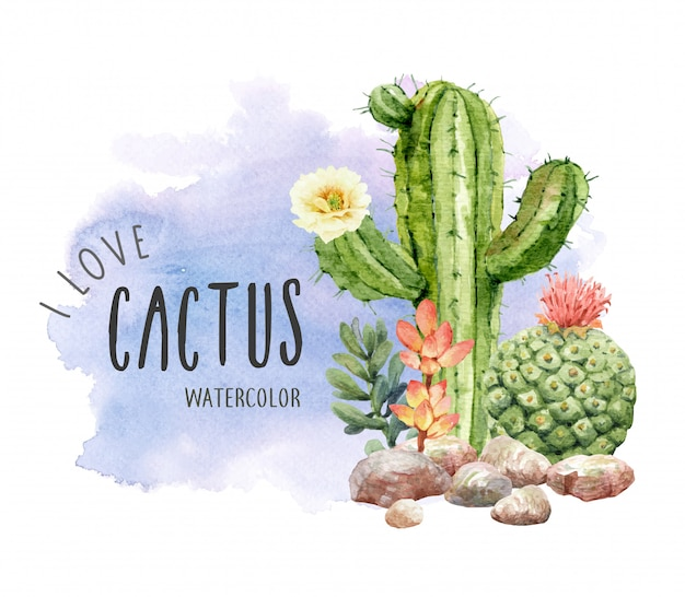 Acuarela colección de cactus y suculentas con piedra.