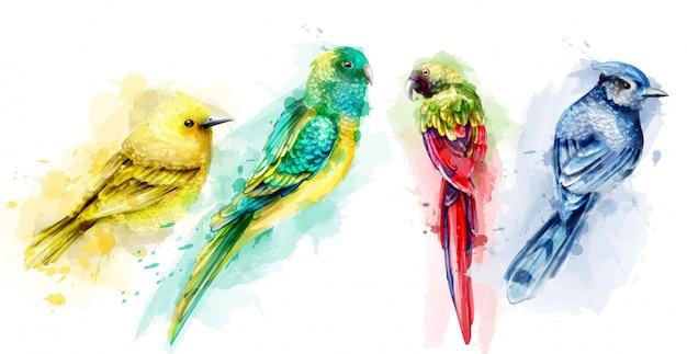 Acuarela de coloridas aves tropicales