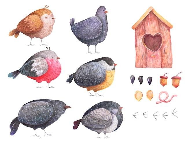 Acuarela conjunto aves bullfinch cuervo gorrión semillas de paloma birdhouse sobre un fondo blanco.