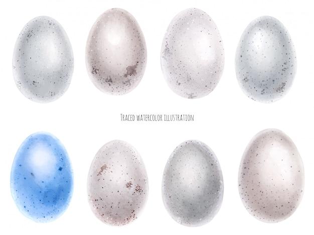 Acuarela conjunto de huevos de aves