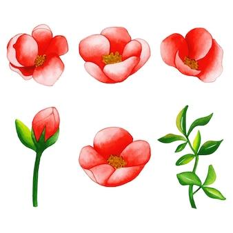 Acuarela floral y colección de hojas.