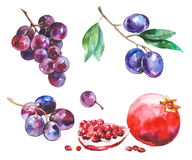 Acuarela frutas aisladas en blanco
