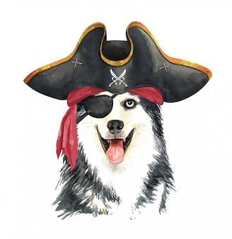 Acuarela husky siberiano con venda pirata y sombrero.