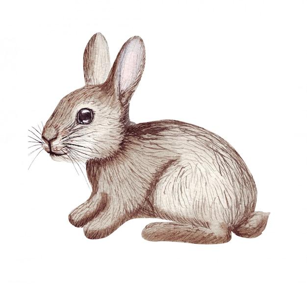 Acuarela lindo conejito de pascua. ilustración de conejo dibujado a mano aislado en blanco