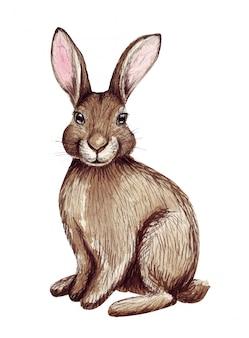Acuarela lindo conejito de pascua. ilustración de conejo dibujado a mano