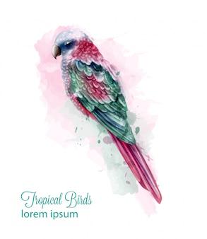 Acuarela de pájaro loro colorido tropical