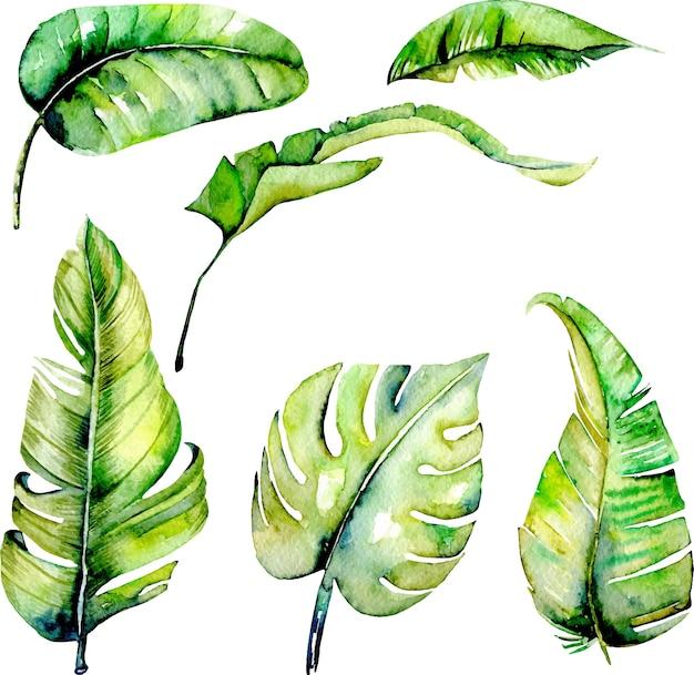 Acuarela de palma tropical verde deja ilustraciones