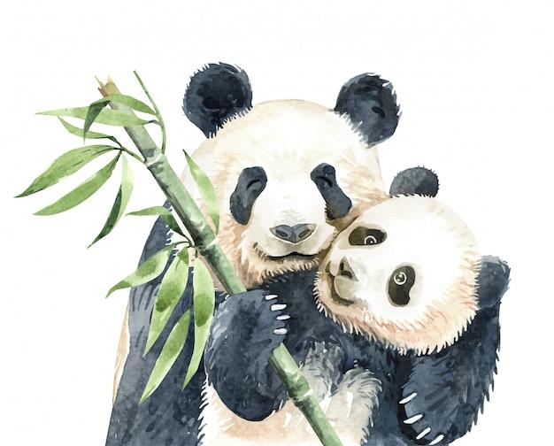 Acuarela panda y bebé panda con bambú.
