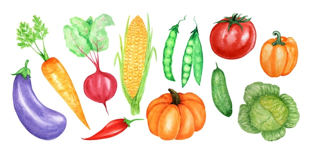 Acuarela pintada colección de verduras. conjunto de elementos de diseño de alimentos frescos dibujados a mano
