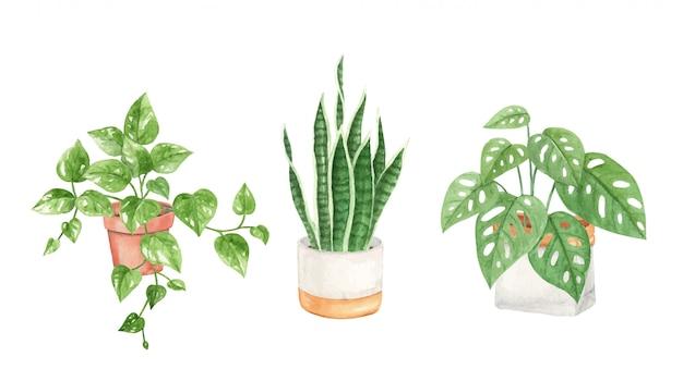 Acuarela pintada a mano plantas de interior