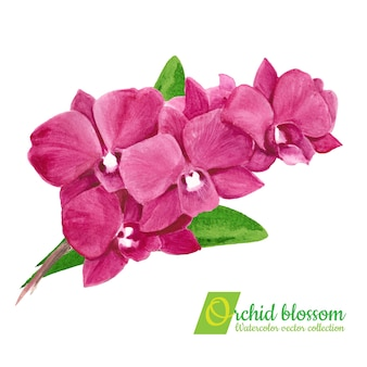Acuarela pintura orquídea ramo aislado.