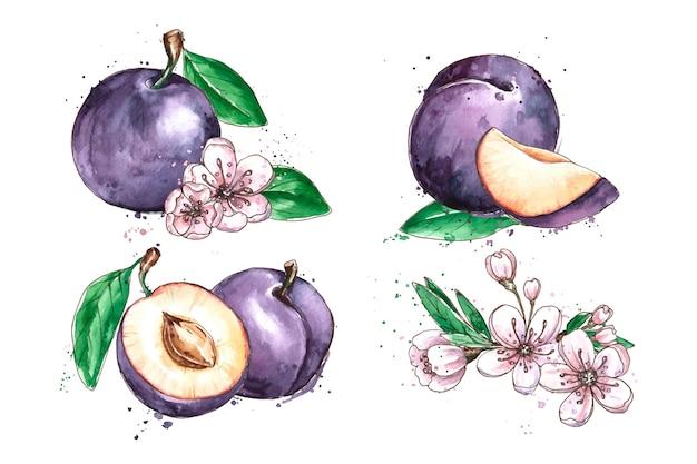 Acuarela plum fruta y flores ilustración