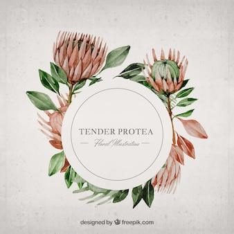 Acuarela protea ilustración