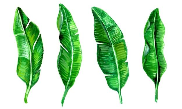 Acuarela realista de colección de hojas tropicales.