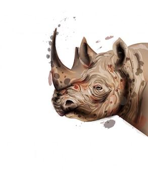Acuarela de rinoceronte