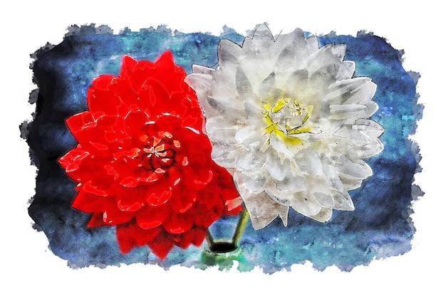 Acuarela de rosa blanca roja