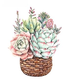 Acuarela suculentos cactus y ramo de cactus con maceta de árbol de piedra.