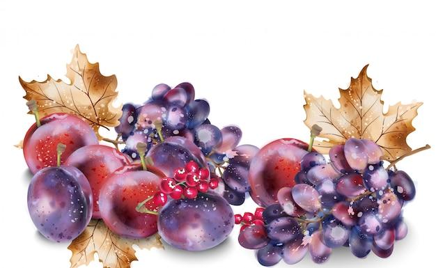 Acuarela de uvas y ciruelas. fondo de cosecha otoño otoño