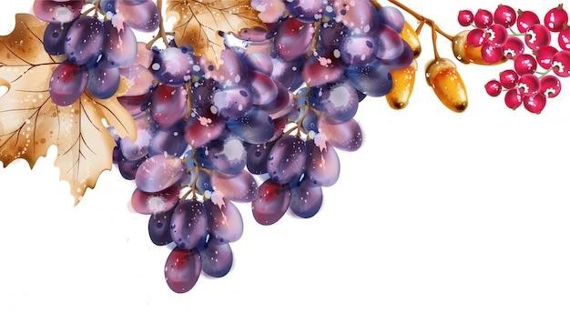 Acuarela de uvas. fondo de cosecha otoño otoño