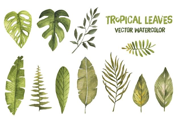 Acuarela vector tropical hojas de hoja de palma exótica selva