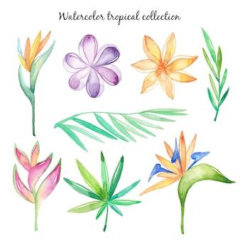 Acuarelas flores tropicales y hojas.