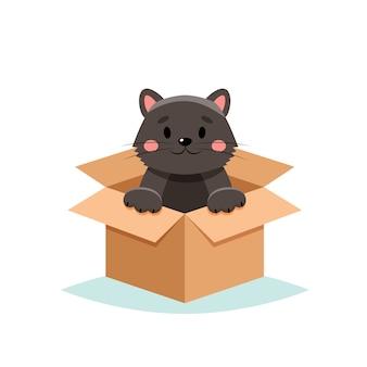 Adoptar una mascota - lindo gato en una caja, sobre fondo blanco.