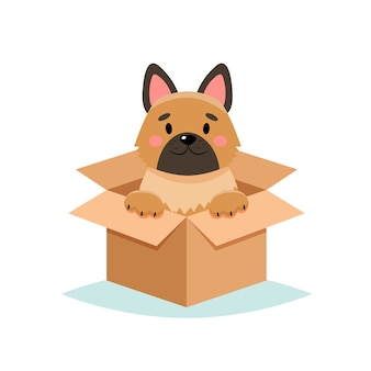 Adoptar una mascota - lindo perro en una caja, sobre fondo blanco.